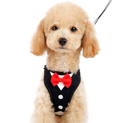 designer dogs easygo bowtie harness from bowwowsbest the best