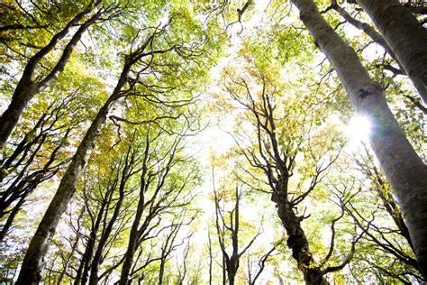 sprookjesbos fairytale forest slieker photography