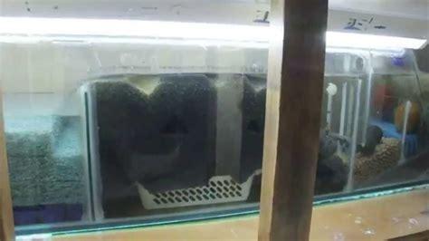 membuat sump filter aquarium diy freshwater sump filtration 8ft tank 5ft sump youtube