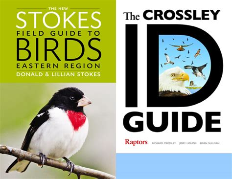 four new books sure to help you id birds of prey birds of