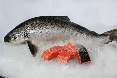 Fillet Ikan Salmon Fresh salmon tasmanian fillets morgans seafood store
