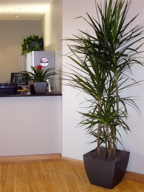 office plant decoration kl 17 best images about houseplants on decor ornamental plants and