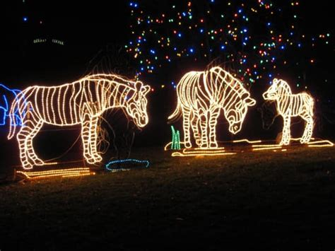zoo lights denver co denver zoo lights northeast denver co yelp