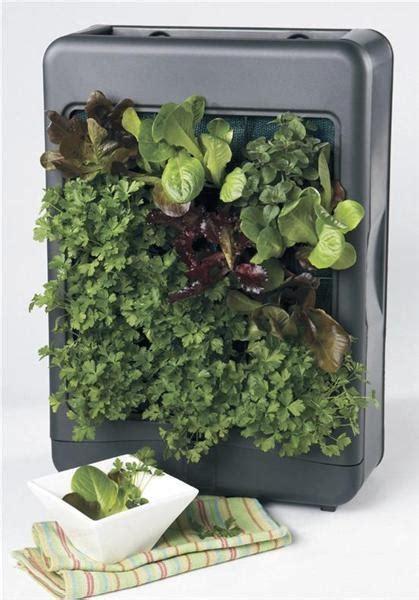 mini herb garden mini herb garden indoor herb garden pinterest