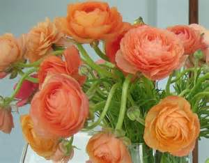 ranunculus colors color cast hues of 2012 sustainable weather