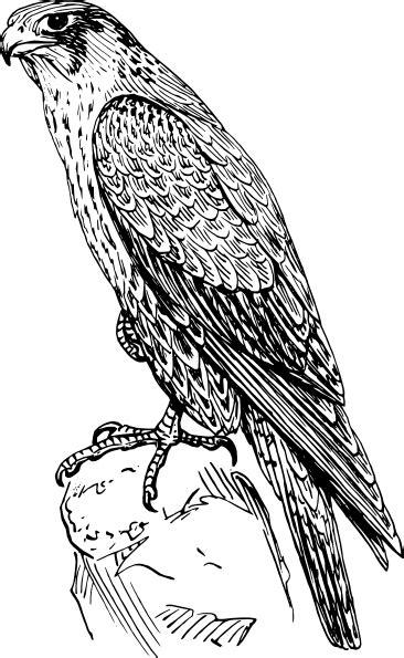 peregrine falcon clip art  clkercom vector clip art
