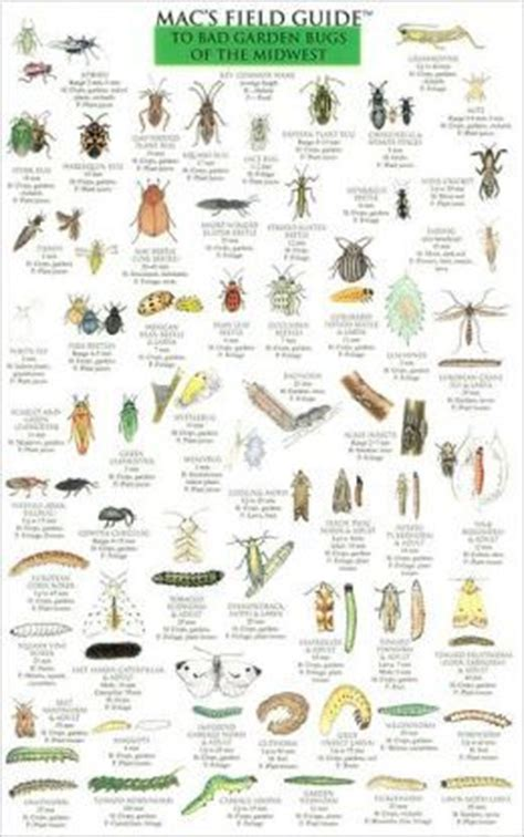 garden insects of america the ultimate guide to backyard bugs books best 25 bug identification ideas on insect