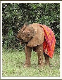 Was Blüht Im Mai 5282 by Die Waisen Im Mai Rettet Die Elefanten Afrikas E V