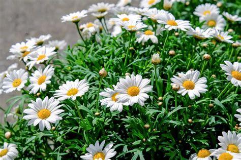 Garten Pflanzen Sommer by Kostenlose Bild Pflanzen Rasen Natur Garten