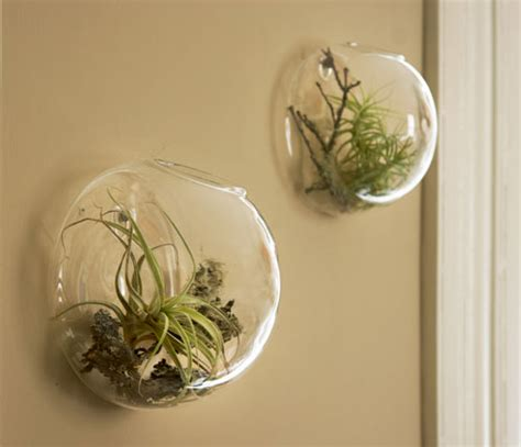 wall vases  air plants shelterness