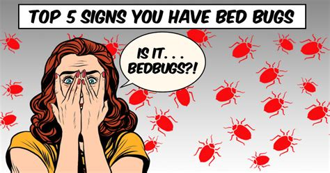 signs that you have bed bugs top signs you have bed bugs pestmax