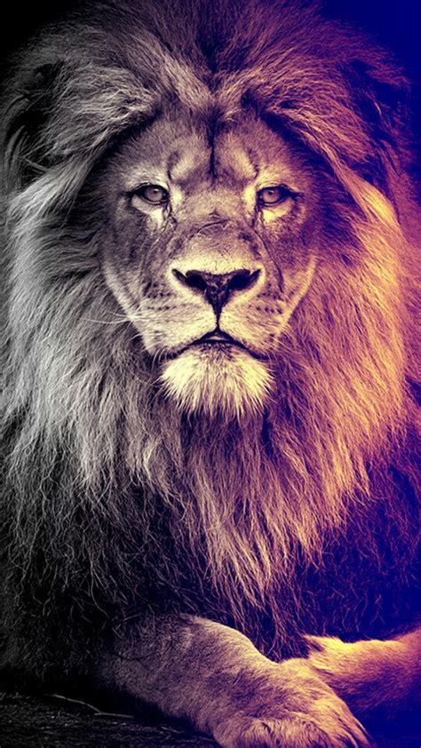 wallpaper iphone lion the 25 best lion wallpaper ideas on pinterest lion