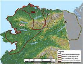 four slope caribou herds counted alaska department