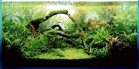 Amano Aquascape by Takashi Amano Aqua Design Amano Awesome Aquariums