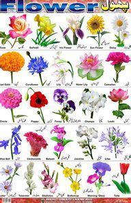 flower identification flower chart identification tables