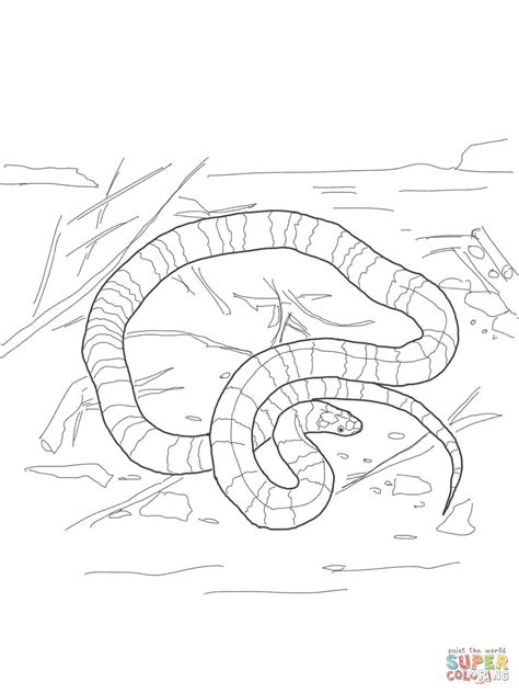 water moccasin coloring page brown school of life the talking earth unit study