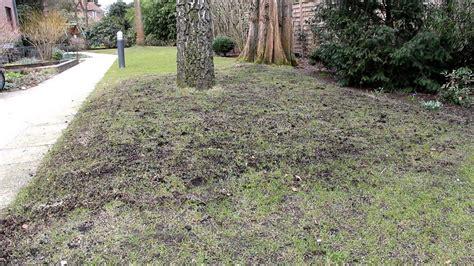Pilze Im Garten Vernichten by Wie Bek 228 Mpft Moos Im Rasen Unkraut Moos Hexenringe Im