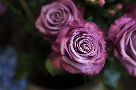 blumen schwabing blumenstr 228 u 223 e blumendeskoration floristik aus m 252 nchen