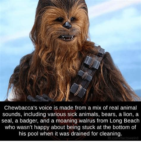 Chewbacca Meme - chewbacca memes star wars characters that should never get