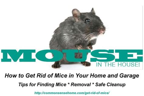 how to get rid of mice in your house how to get rid of mice in your home and garage