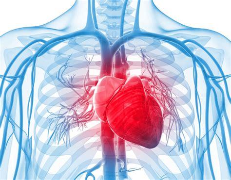 libro a question of blood insufici 234 ncia card 237 aca o que 233 causas e tratamentos atualizado