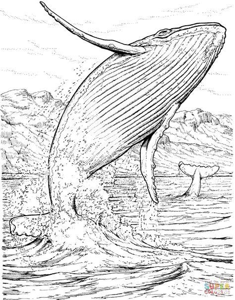 fin whale coloring page disegno di balenottera azzurra che salta fuori dall acqua