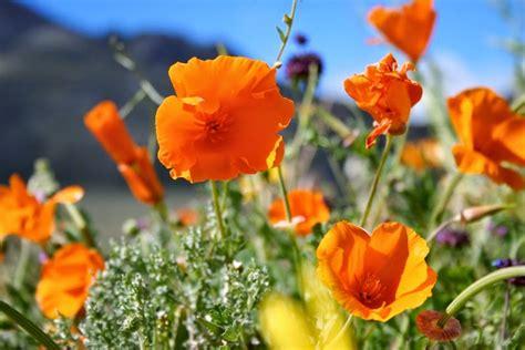 desert flowers sasquatch jones october 2014