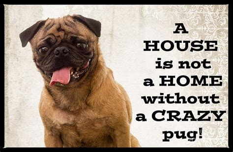 house a pug house is not a home without a pug photograph by edward fielding