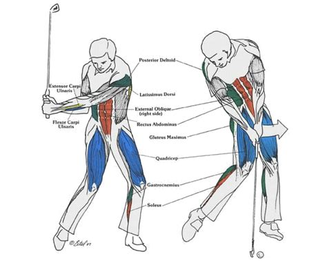 golf swing muscles golf fitness