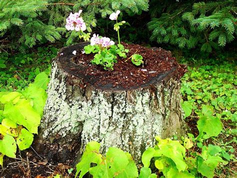 Tree Planters Nursery Springvale by Tree Stump Planting In Your Summer Garden