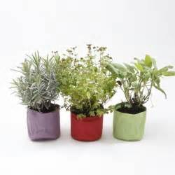 Herb Pot by Herb Pots Ebay