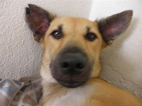 care after spaying spaying subsidy for a ralph ravindran s animalcare petfinder my