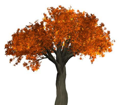 autumn tree png transparent image pngpix