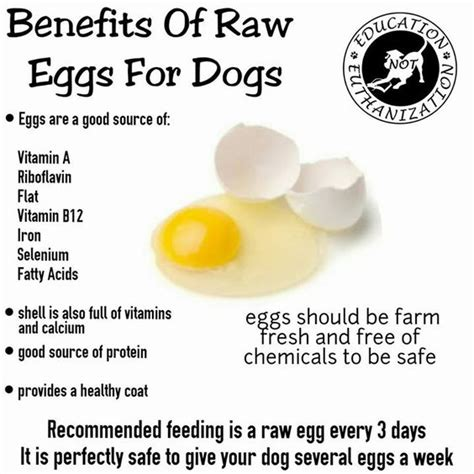 unusual sources of protein in cat and dog foods sources of vitamin a vitamin b12 and benefits of on pinterest