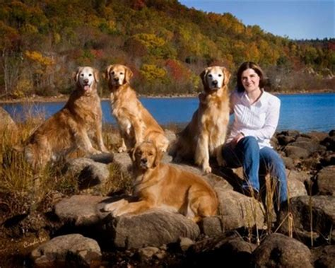 golden retriever breeders new brunswick nikmor goldens golden retrievers quispamsis new brunswick canada