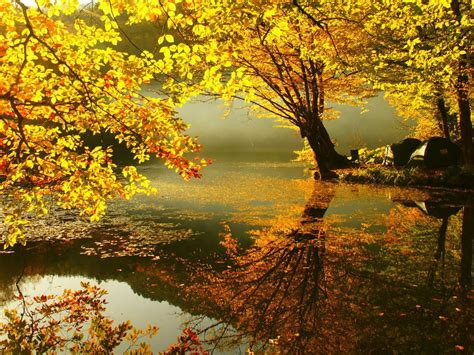 wallpaper full hd autumn 3d autumn wallpapers full hd pictures