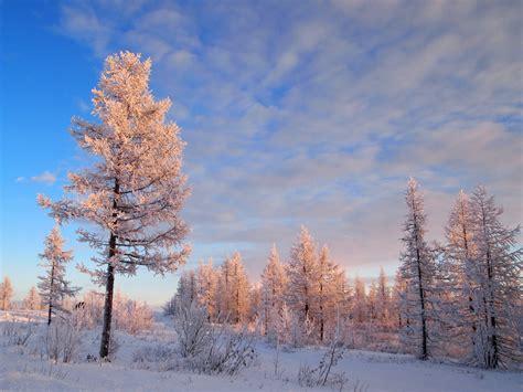 imagenes de arboles invierno fondos de pantalla estaciones del a 241 o invierno cielo nube