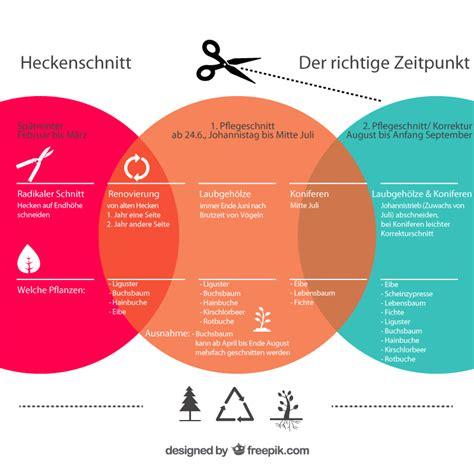 Ab Wann Hecke Schneiden by Heckenschnitt Der Richtige Zeitpunkt Phlora De