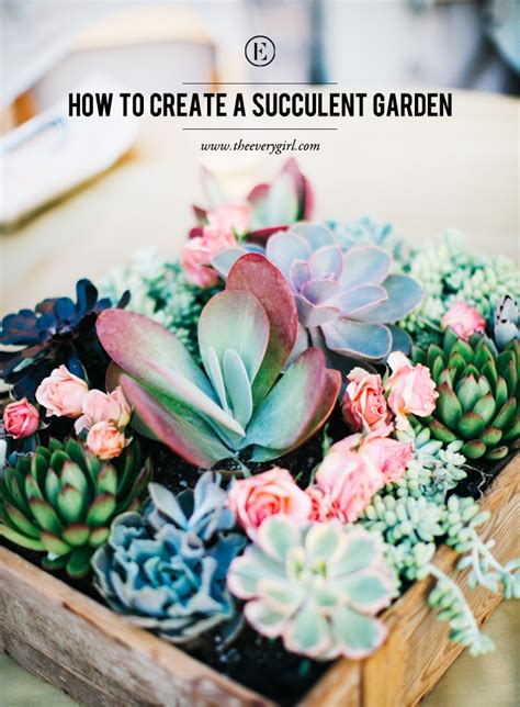 how to make a succulent wall garden how to create a succulent garden the everygirl