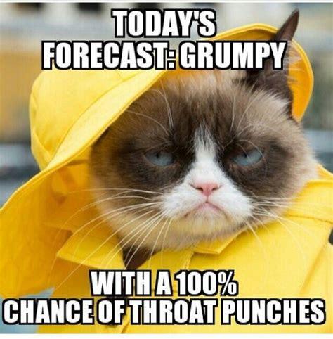 Grumpy Cat Meme Love - best 25 hercules quotes ideas on pinterest hercules