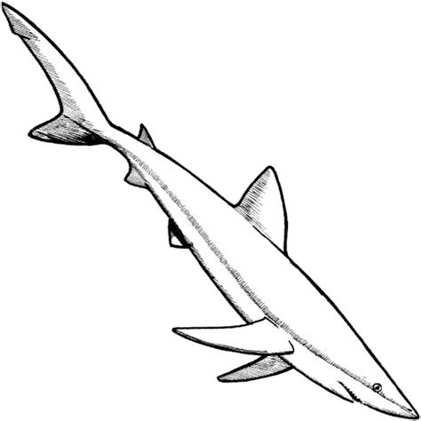 can sharks see color shark coloring pages 2 coloring