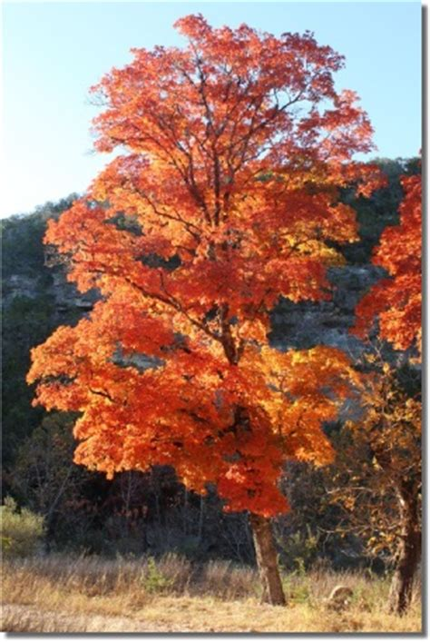 lost maples state park  camping trip  experience