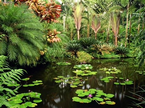 Big Island Botanical Gardens with Hawaii Tropical Botanical Gardens Only In Hawaii