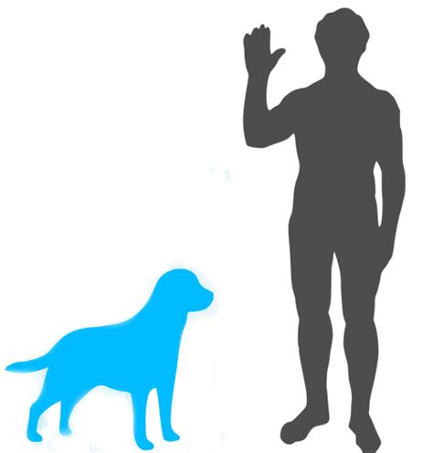golden retriever coat growth what s the difference between a labrador and a golden retriever quora