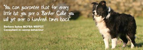 border collie puppies colorado mainline border collie centre