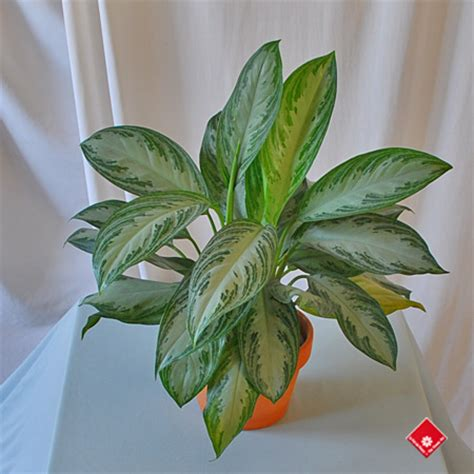 common house plants for funerals potted funeral plants trainer