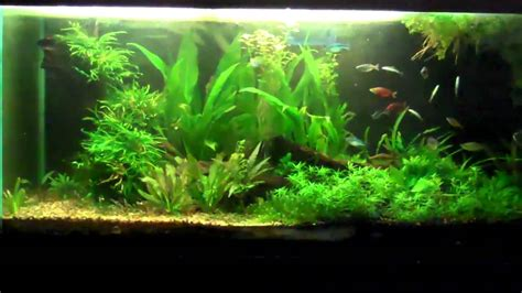 Aquascape Aquarium Plants by Aquascaping Your Planted Aquarium Planted Tank