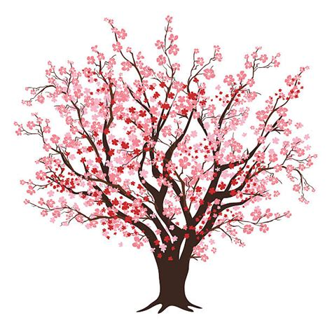 cherry blossom clip cherry blossom clipart flowering tree pencil and in