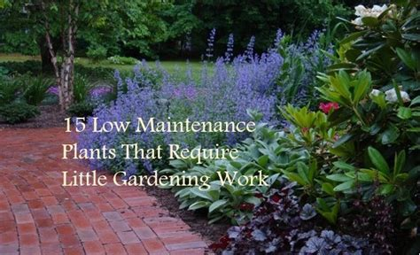 how to plant a flower garden 15 low maintenance plants that require gardening