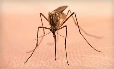 Georgia Backyard Kennesaw The Mosquito Authority Of Metro Atlanta Woodstock Ga